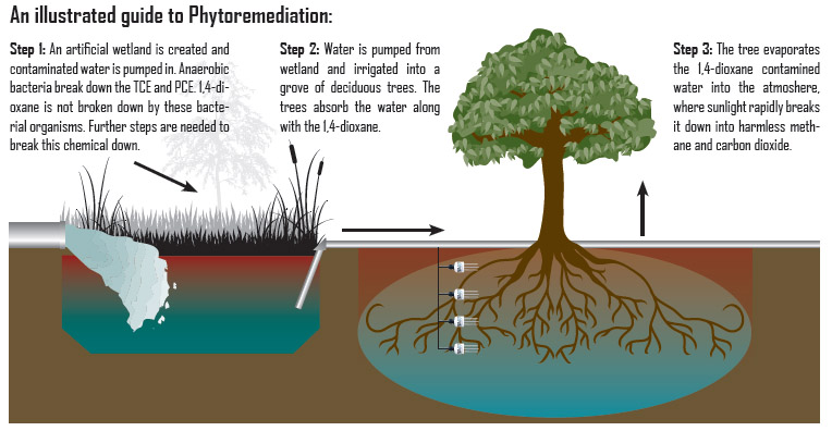 Phytoremediation- The Organic Cure - Follow Green Living