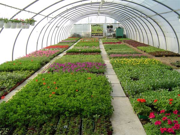 Horticulture : Practices and The Therapy