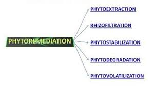 The various processes, which are involved in phytoremediation.