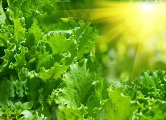 Chlorophyll : A disguised elixir! - Follow Green Living