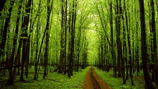 Forests- Reason for our Survival! - Follow Green Living