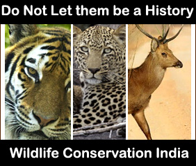 wildlife-conservation-india