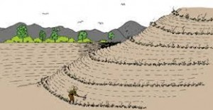 Lack of forest cover is largely responsible for erosion of soil.