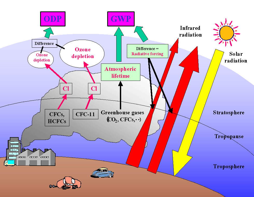 global effects of ozone depletion essay