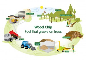 eng-woodfuel-fuel-illustration