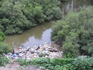 garbage being thrown in Mumbai's mangroves. This is the reason they smell