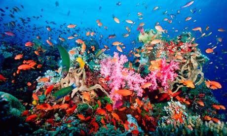 The beauty of these coral reefs has been mesmerizing the marine lovers.