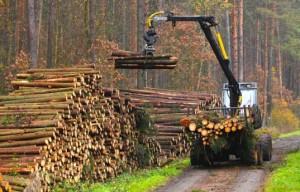 Deforestation-537x345