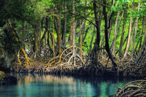 Look how scenic this looks, Mumbai mangroves could be like this too