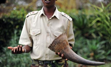 Kenyan-wildlife-official--007