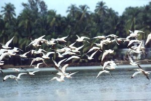 Sights like these have been mesmerizing bird watchers for long. Let them delight you.