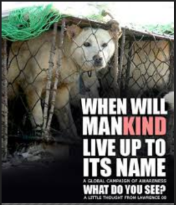 animal cruelty-mankind