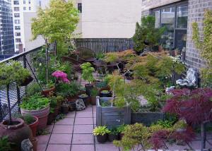 Plants kept in balcony