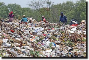 Stop illegal dumping in mangroves