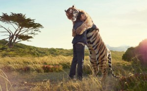 It is possible for man and tiger to peacefully coexist. We just need to make an effort