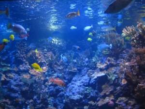 Save the oceanic Habitat