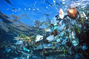 the plastic and garbage that accumulates in the ocean