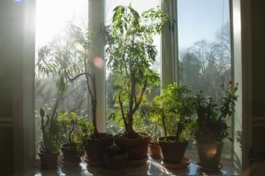 potted plants on your window sill have a way of cooling the room. They look nice too