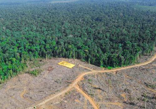 Deforestation due to mining