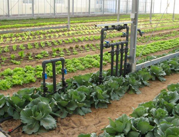 Organic Food Abu Dhabi