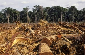 Deforestation in the Amazon. Another cause of global warming