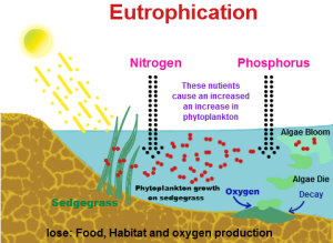 Diagram of Eutrophication