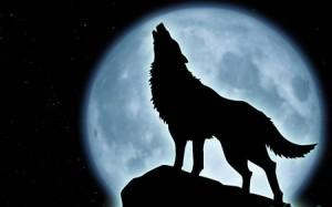animals-moon