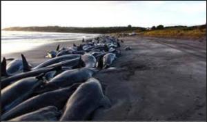 beached wale