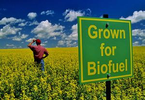 biofuel farm