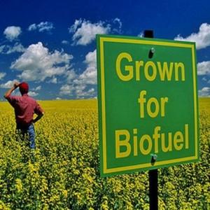 biofuel field