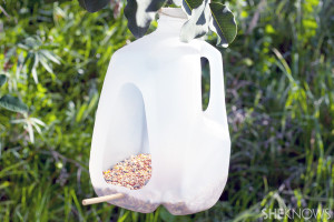 bird_feeder_outside