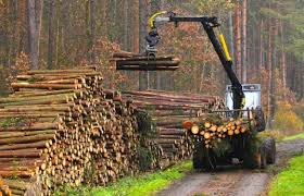 deforestation the effects and prevention follow green