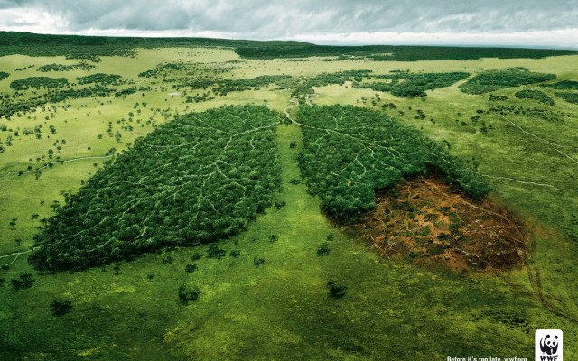 deforestation. Killing Earth's green lung