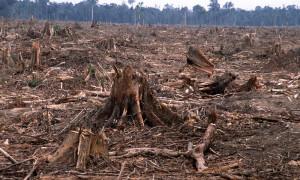 what deforestation looks like