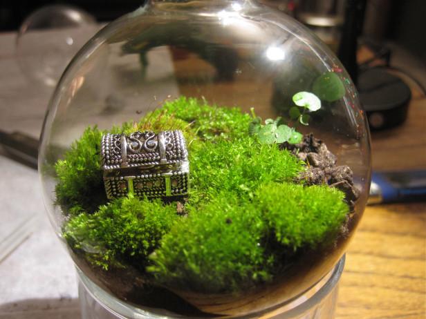 Diy Your Own World A Terrarium