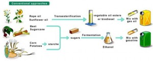 first-generation-biofuels