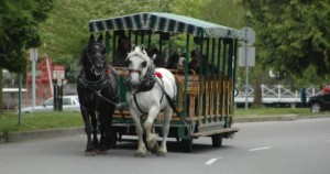 horse-drawn-tour-vehicle-in-stanley-park