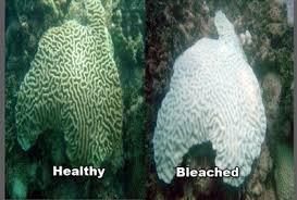 bleached reefs