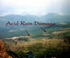 Acid rain damage