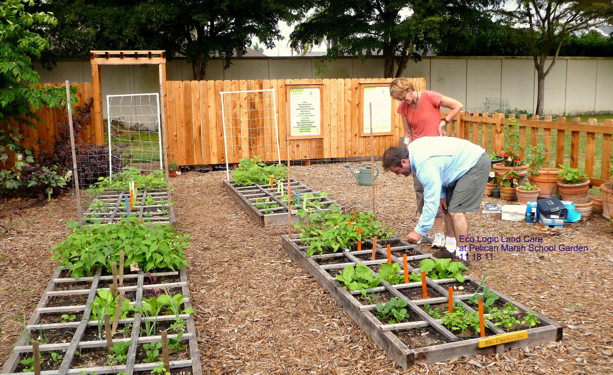 Tips Membuat Kebun Organik di Rumah