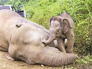 Ivory trade kills elephant