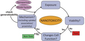 nanotoxicology cycle