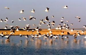 natural-habitats-and-species-diversity
