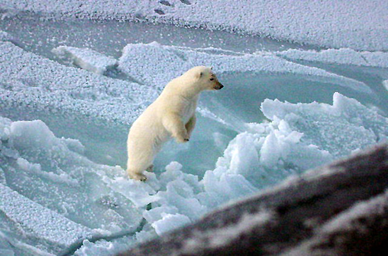 The Ozone hole over the Antarctic will negatively affect the polar region, and all the animals that dwell there