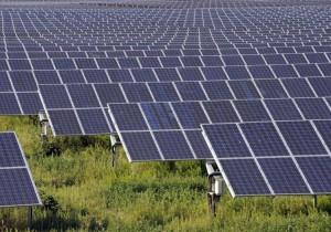 solar farm using panels to absorb sunlight