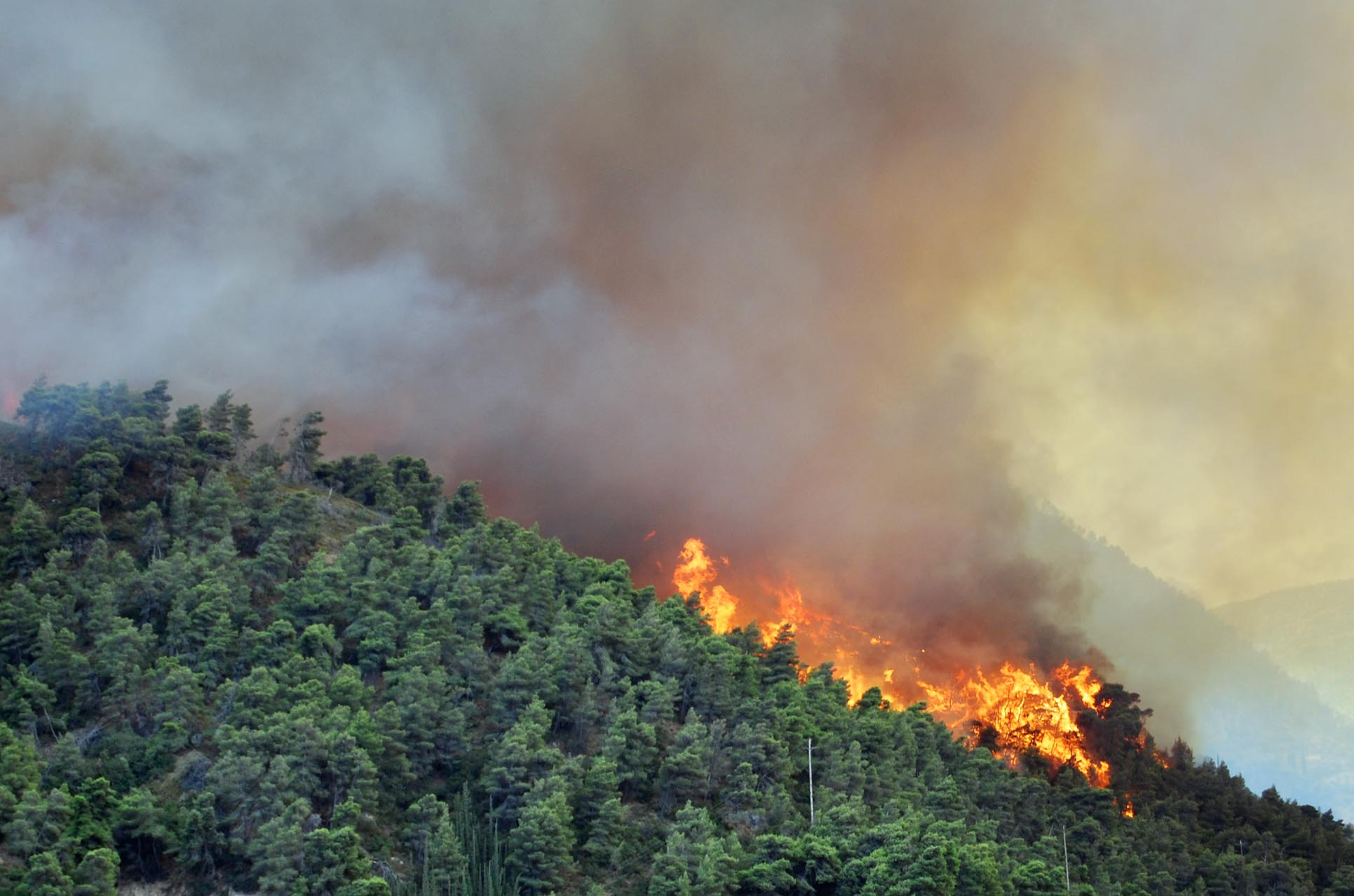 Who causes Forest Fire - Nature or Human Beings? - Follow ...