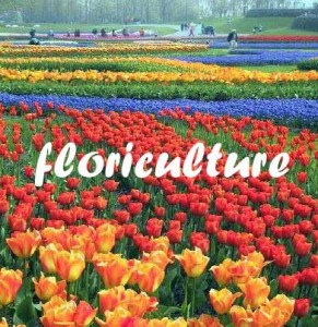 Indian-Floriculture-Industry