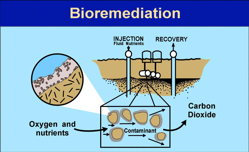 an analysis of bioremendiation In addition, the effectiveness of intrinsic bioremediation must be proven with a site-monitoring regime that includes chemical analysis of contaminants, final electron acceptors, and/or other reactants or products indicative of biodegradation processes (as explained in chapter 4.