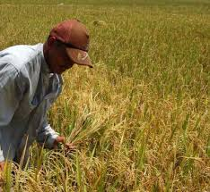 crops due to cloud-seeding