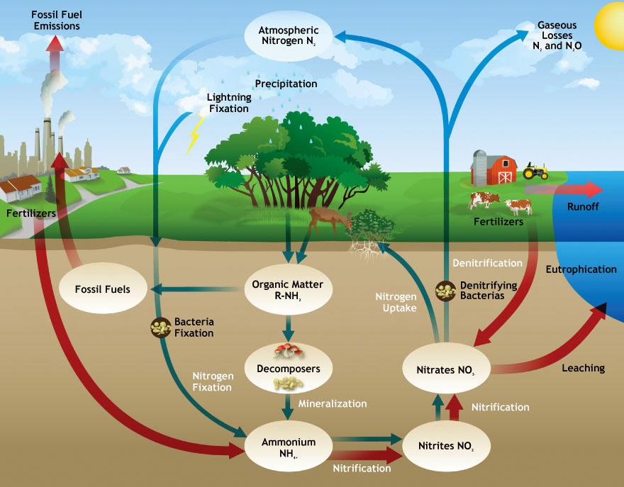 Soil Ecology   The Essential Nutrients And Horizons